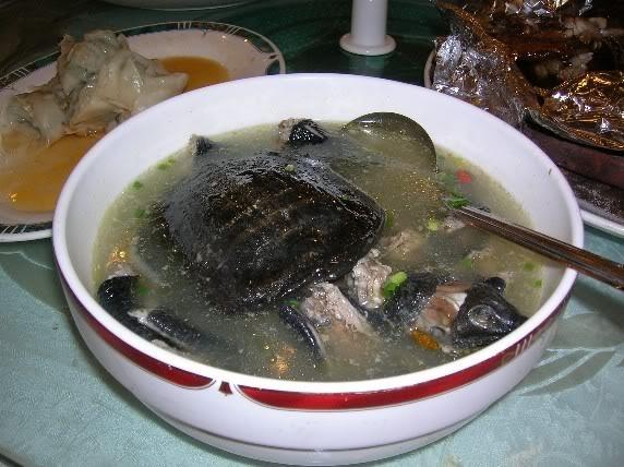 Экзотические блюда Китая Супы из черепахи
